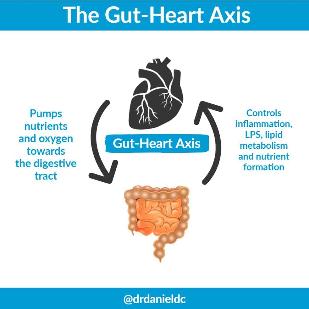 Gut-Heart-Axis