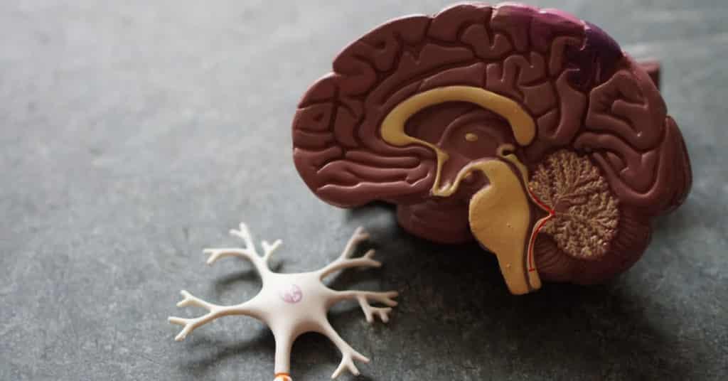 brain and fat loss